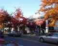 Mill Hill Road shops in the Fall